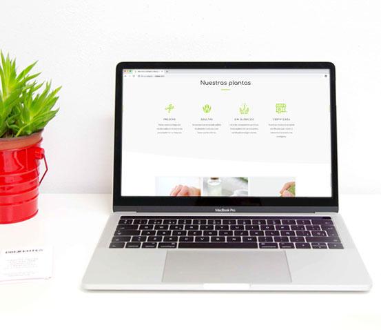 Página web Aloe Vera Destacados